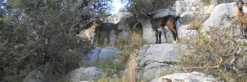 Bild zur Tour Andalusien   Spanien