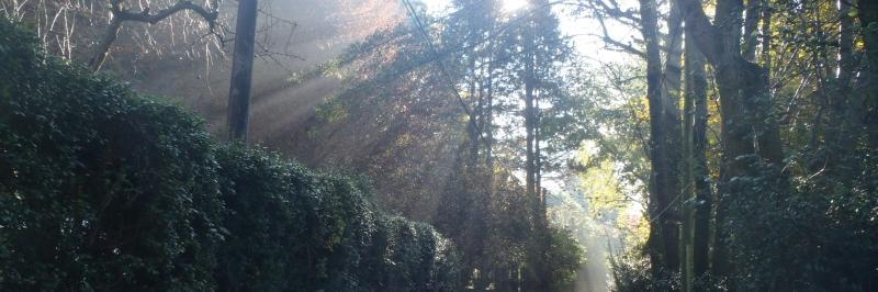 die Sonne scheint durch die Äste von zahlreichen hohen Bäumen im Wald - gesehen auf der individuellen Wanderung am Lago Maggiore