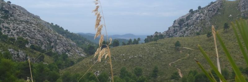 Grashalm im Vordergrund, dahinter der weitere Wanderweg durch die Berge der Serra de Tramuntana auf Mallorca