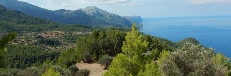 Grüne Bäume im Vordergrund, im Hintergrund Berge und das blaue Meer - gesehen auf der Wanderung durch die Serra de Tramuntana auf Mallorca