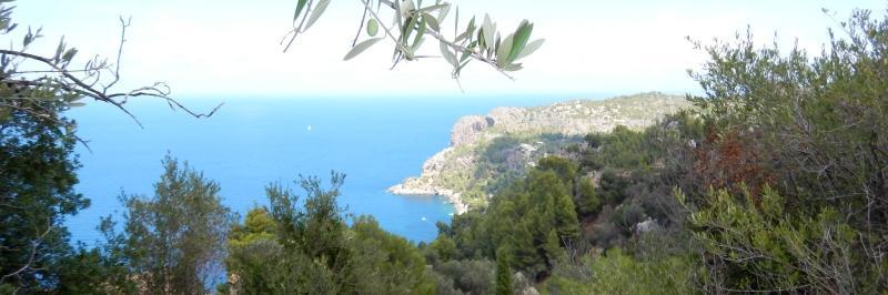 im Vordergrund ein dünner Ast, dahinter eine Bucht mit strahlend blauem Wasser - gesehen auf einer individuellen Wanderung auf Mallorca